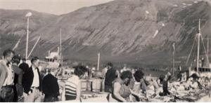 På sildesalteriet til Olav Hendriksen i Siglufjördur på 1960 tallet