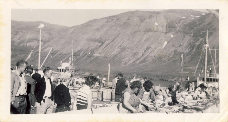 Síldarsöltun hjá Olav Hendriksen Siglufjörður